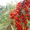 botanicheskaya
