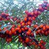 botanicheskaya1