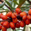 botanicheskaya2