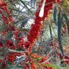 botanicheskaya3