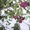 desertnaya-michurina